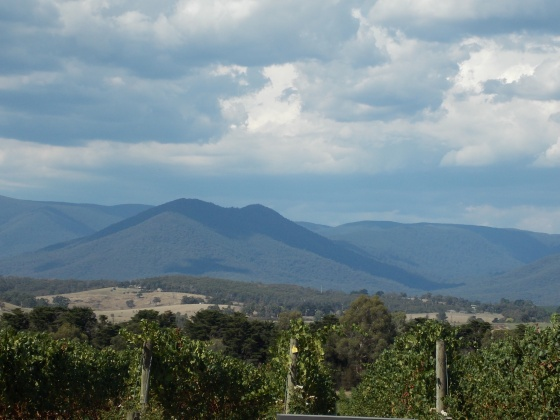 the Yarra Valley