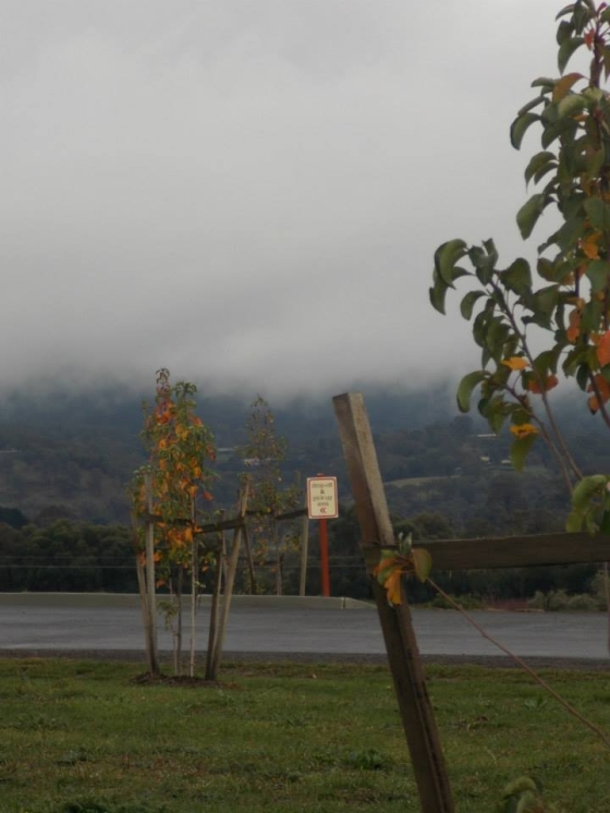 Love the low fog at the Yarra Valley Chocolaterie & Creamery