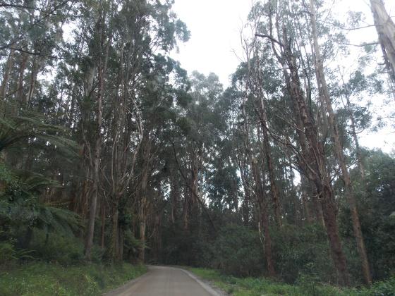 Australian woods