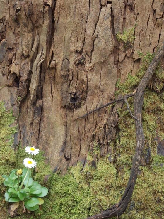 tiny flower, enormous tree