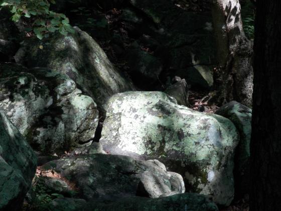 Hackelbarney State Park, New Jersey