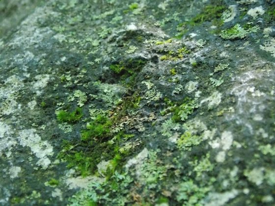 Moss at Hackelbarney Park, NJ