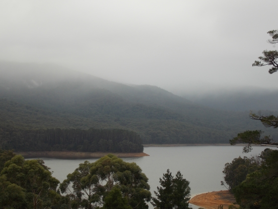 Tired like the fog over Maroondah Reservoir.