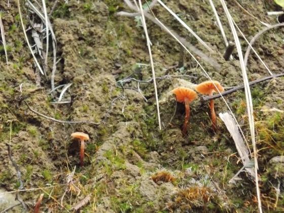 Mushrooms at Steavenson Falls, Marysville, Victoria. Australia.