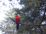 Or neon-colored, like this king parrot. Badger Weir, Victoria, Australia.
