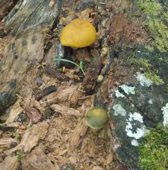 Mushrooms at Tawharanui Regional Park, New Zealand.