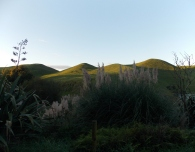 Evening light on New Zealand hills. (Te Waihou Walkway, New Zealand.)