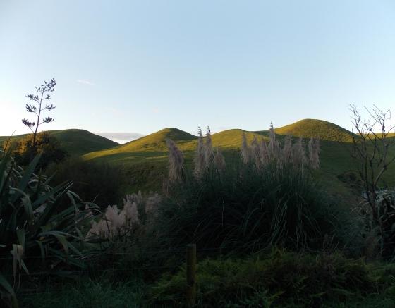 Evening light on New Zealand hills. (Te Waihou Walkway, New Zealand.)