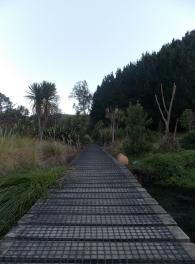 Te Waihou Walkway, New Zealand