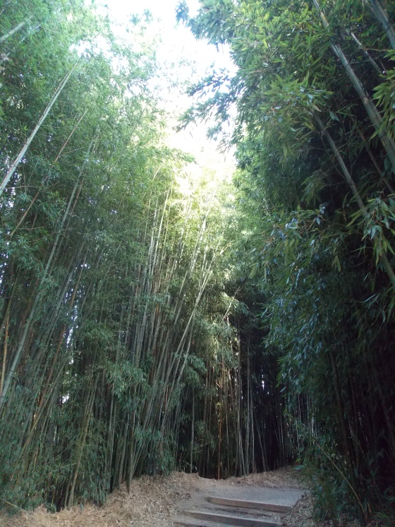 A bamboo alley in Hamilton Gardens, Hamilton, Waikato. New Zealand.