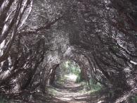 Bushrangers Bay Trail, Mornington Peninsula, Victoria. Australia.